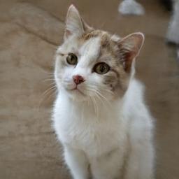 cat2070.jpg